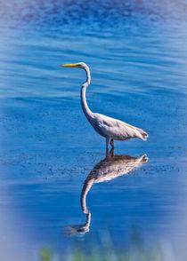 Crooked Neck Egret Portrait von John Bailey