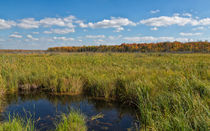 Magnificent Minnesota Marshland von John Bailey