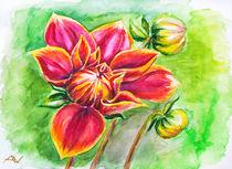 Blooming Dahlia flower, watercolor painting von valenty
