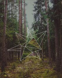 Mystic Forest by Florian Barfrieder