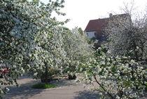 Blühende Bäume by Martin Müller