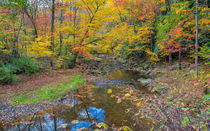 Many Colored Forest by John Bailey