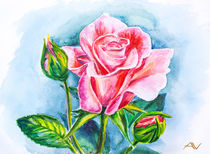 Beautiful rose, watercolor painting by valenty