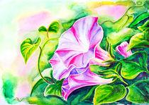 Convolvulus flowers. Watercolor painting. von valenty