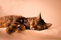 Tabby cat sleeping by Gema Ibarra