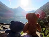 Zwei Teddybären im norwegischen Sonnenlicht by Olga Sander