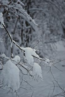 Winter106