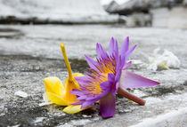 Star Lotus by Christina Rahm