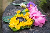 Ceremonial flowers von Christina Rahm