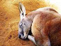 Sleepy Roo by Glen Mackenzie