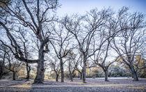 A-winter-morning