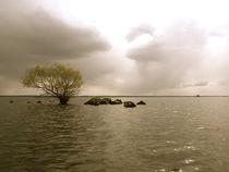Baum im See by Heike Nedo