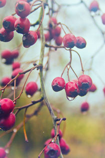 Wet-berries