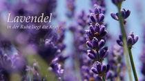 Lavendel by Thomas Haas