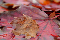 Herbstimpression II by Thomas Haas