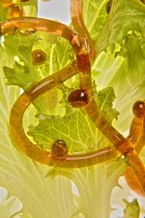 Molekulares Kochen Salat - Molecular cooking salad von Marc Heiligenstein