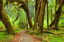 Path through lush rainforest by Sara Winter