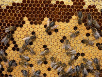 Bienenwabe von Heike Nedo