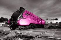 Pink Bittern  von Rob Hawkins