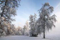 Winterwunderland by Bruno Schmidiger