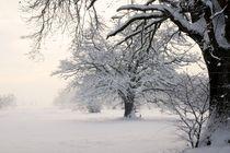 Bäume im Winterkleid by Bruno Schmidiger