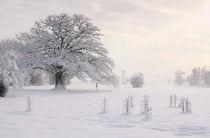 Winterzauber by Bruno Schmidiger