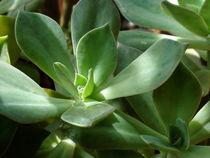 Succulent green by Inge Meldgaard