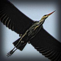 Flight by Carmen Wolters