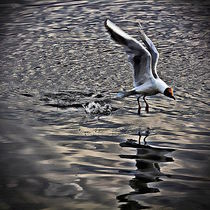 Splash Landing by Carmen Wolters