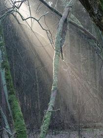 Lichtspiele im Winterwald von Antje Püpke