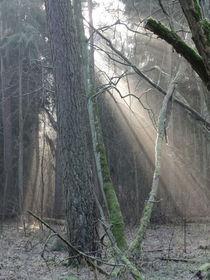 Lichtdurchfluteter Winterwald von Antje Püpke