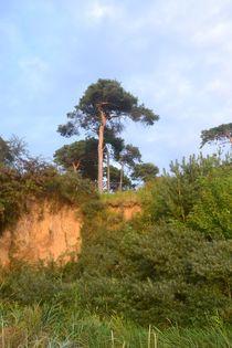 Steilküste von Ute Bauduin