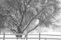Winter-tree2