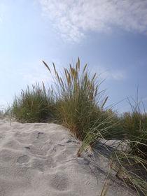 Strandhafer von Ute Bauduin