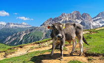 Dolomiti - alpine pasture by Antonio Scarpi