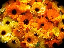 Ringelblumen Sommerfreude von Heike Nedo