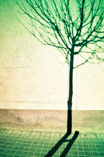 Shadows 1 by Marc Solermarce