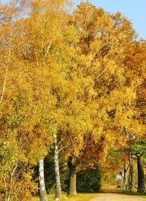 Leuchtender Herbst by gscheffbuch