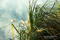 Am See von Kurt Gruhlke