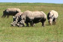 Group Of White Rhino by Aidan Moran
