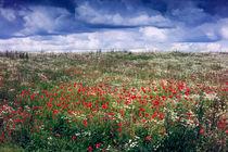 Poppies-art