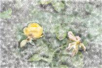 Aquarell Rose 8528 by Mario Fichtner