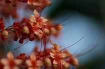 Nectar-dreams