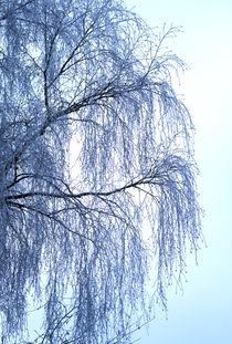 Winterweide von Heidrun Lutz