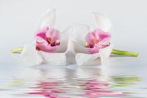 Orchidee-2