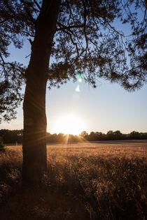 Sonnenschein über dem Feld by gilidhor