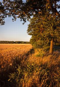 Feld am Wegesrand by gilidhor