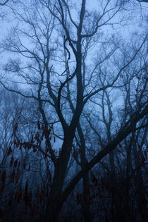 Wald im Nebel by gilidhor
