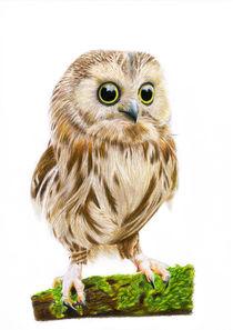 Cute owl  by Liubov Lebedeva