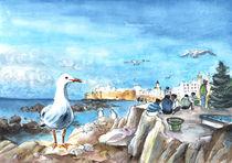 Essaouira-seagull-m